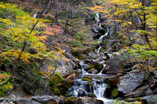 A Waterfall With Changing Leaves Of Lenga Trees In Autumn, Nahuel Haupi National Park, Near Bariloche In Patagonia, Argentina.