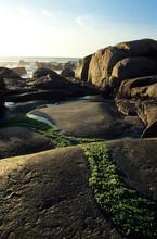 A Moss Strip Grows On The Rocks By The Sea, Lavadores, Vila Nova De Gaia, Portugal.