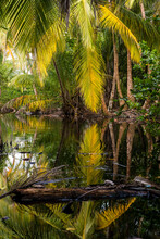 A Glowing Palm Frond Reflects Off Of A Pond In The Late Afternoon Light On Little Corn Island In Nicaragua.