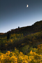 Moonlight And Streaks Of Light Upon Golden Aspen Leaves During A Crescent Moon.