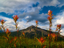 Indian Paintbrush Wildflowers, Crested Butte Peak
