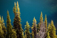 High Angle View Of Pine Trees On The Shore Of Rainy Lake, North Cascades Scenic Highway Corridor, Washington.