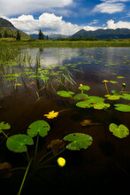 Pond With Lilly Pads, Molas Divide, Rocky Mountains