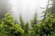 Paradise Park, Cascade Range, Mount Rainier National Park