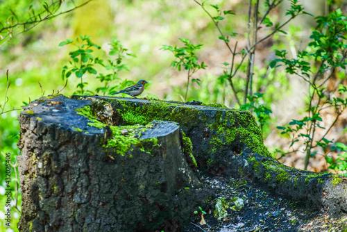 Dziki ptak w lesie na pniu - fototapety na wymiar