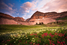 Wild Flowers And Sunset At Mt. Timpanogos In The Rocky Mountains Of Utah.