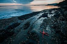Starfish. Puget Sound. Washington.