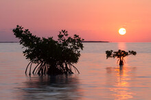Sunrise Over The Mangrove Flats In Florida Bay Within Everglades National Park, Florida.