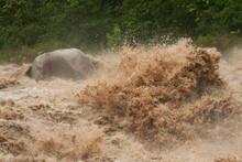 After A Big Rain Event The Cangrejal River Rushes Toward The Sea, Honduras.