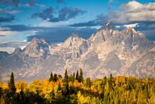 Fall Aspen Leaves Stand Beneath The Teton Mountains In Grand Teton National Park, Wyoming.