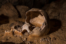 The Almost Intact Skull Of A Mayan Sacrificial Victim In The Crystal Cave In Belize.