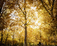Colorful Leaves At The Jardin Du Luxembourg, Or The Luxembourg Gardens, Is The Second Largest Public Park In Paris.