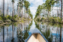 Okenfenokke Swamp, GA: The Canal With It's Many Shapes And Looks As I Paddle Through To My Destination