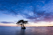 A Mangrove Stands Tall Against The Colors Of A Sunset Sky On Florida Bay Within Everglades National Park, Florida.