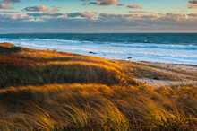 Sunset Along Moshup Beach, Martha's Vineyard With View Of Ocean And Grass Blowing During Late Fall