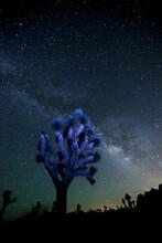 Joshua Tree, Stars And Milky Way In The Joshua Tree National Park In California.