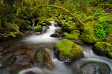A Classic Creek Scene In Oregon's Columbia River Gorge, Complete With A Natural Moss Laden Arch.