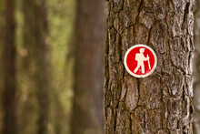 A Hiking Trail Blaze/placard Is Seen On A Pine Tree Near The Chesapeake Bay Near Grasonville, Md.