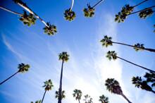 Palm Trees And Sky In Santa Barbara California.