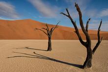 900 Year Old Dead Trees In Dead Vlei, Sossusvlei, Namib-Naukluft National Park, Namibia