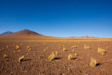 Scattered Tufts Of Ichu Grass Survive The Cold, Windswept, High-altitude Desert Of The Sud Lipez Region Between Laguna Colorada And Verde In Southwestern Bolivia In The Department Of Potosi.
