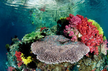 A Shallow Reef Scene With Hard & Soft Coral In Triton Bay/Raja Ampat, Indonesia