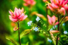 Wild Flowers In The Utah Backcountry Mid Summer