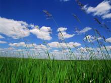 Little Missouri National Grasslands