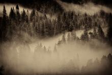 Fog Settles In The Valley Floor In Yosemite National Park, California.