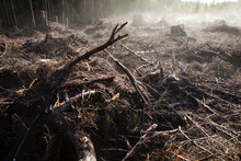 Moisture In The Newly Exposed Soil Rises As Steam From A Recent Clear-cut On The Olympic Peninsula, Washington.