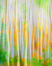 Fall Color Impressionism.