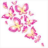Fototapeta Motyle - butterfly796