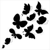 Fototapeta Motyle - black and white butterfly