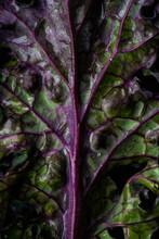 Close Up Of Kale