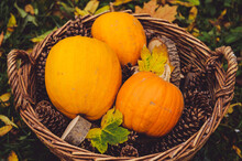 Closeup Of Fresh Pumpkins With Pine Cones In A Basket Under The Sunlight