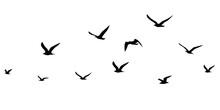 Silhouettes Of Birds Set. Seagulls In Flight Isolated. Migration Of Birds. Vector Stock Illustration