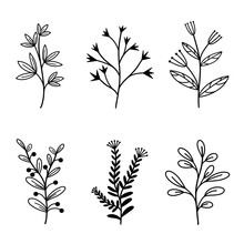 Set Of Vector Natural Elements Branches With Leaves And Wild Herbs. Hand Drawn Plants In Doodle Style. Botanical Elements With Berries And Inflorescences. Isolated Flowers On White Background