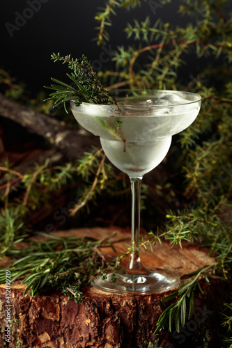 Obraz Gin and Tonic cocktail with rosemary and thyme. - fototapety do salonu