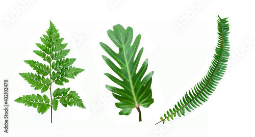 Stampa su Tela set of tropical fern leaf on white background for design elements, Flat lay