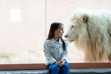 Little Girl And Lion Behind Glass At The Zoo
