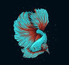 Illustration Vector Beautiful Betta Fish