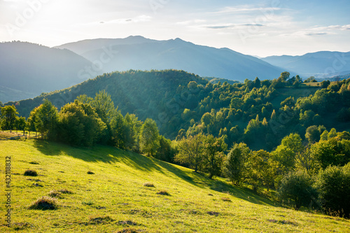 Fototapeta rural landscape in mountains at sunset. trees and fields on grassy rolling hills. beautiful countryside scenery of transcarpathia region, ukraine, in evening light. wonderful sunny weather in autumn obraz