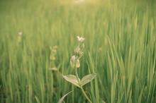 Wild Flower In Meadow In Spring