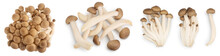 Brown Beech Mushrooms Or Shimeji Mushroom Isolated On White Background. Set Or Collection