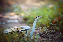 Python  In The  Tropocal Garden / Snake