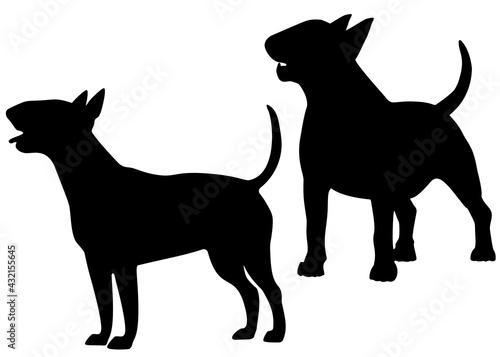 Foto Bull terrier dog in the set. Vector image.