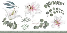Vector Floral Set. White Lilies, Eucalyptus Sprigs, Seaweed, Green Leaves And Plants. Flowers And Plants On White Background.