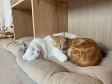 Baby Cat And Her Mother Sleep At Home