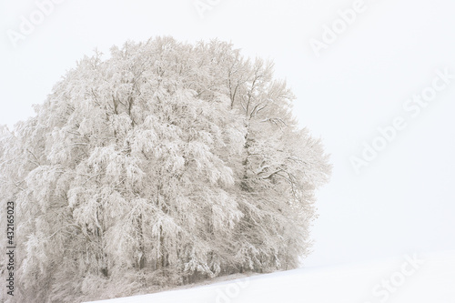 Fotografie, Obraz Baum,Schnee, Winter, kalt,eisig
