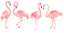 Watercolor Set With Pink Flamingos